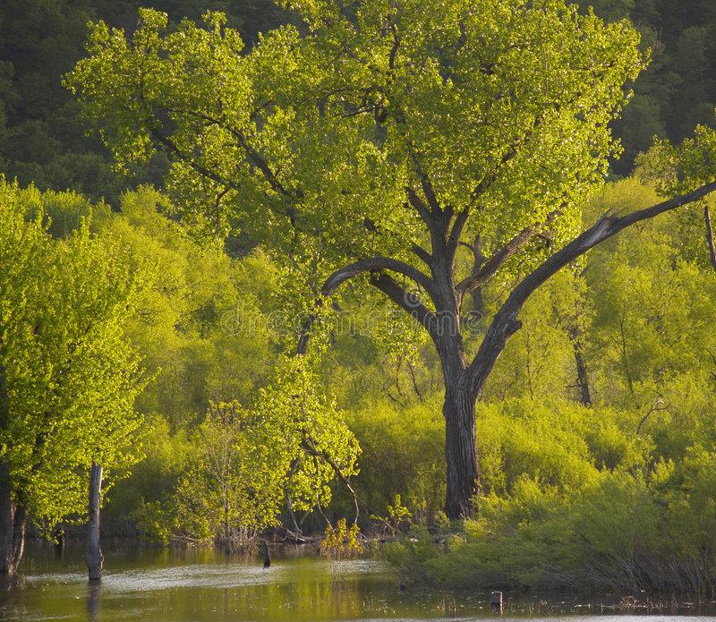 arbre-du-psaume-1-901265