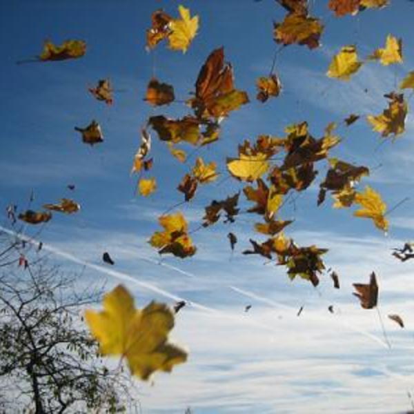 vent_feuilles-2