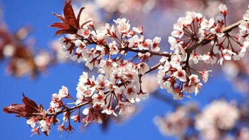 fr-printemps