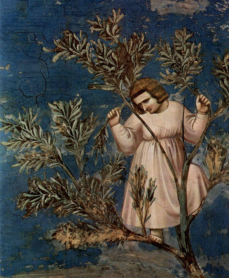 800px-Giotto_di_Bondone_014.jpg