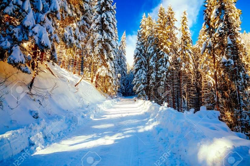 62635848-belle-montagne-paysage-enneigé-et-les-arbres-couverts-de-neige-belle-journée-ensoleillée-dans-les-montagne.jpg