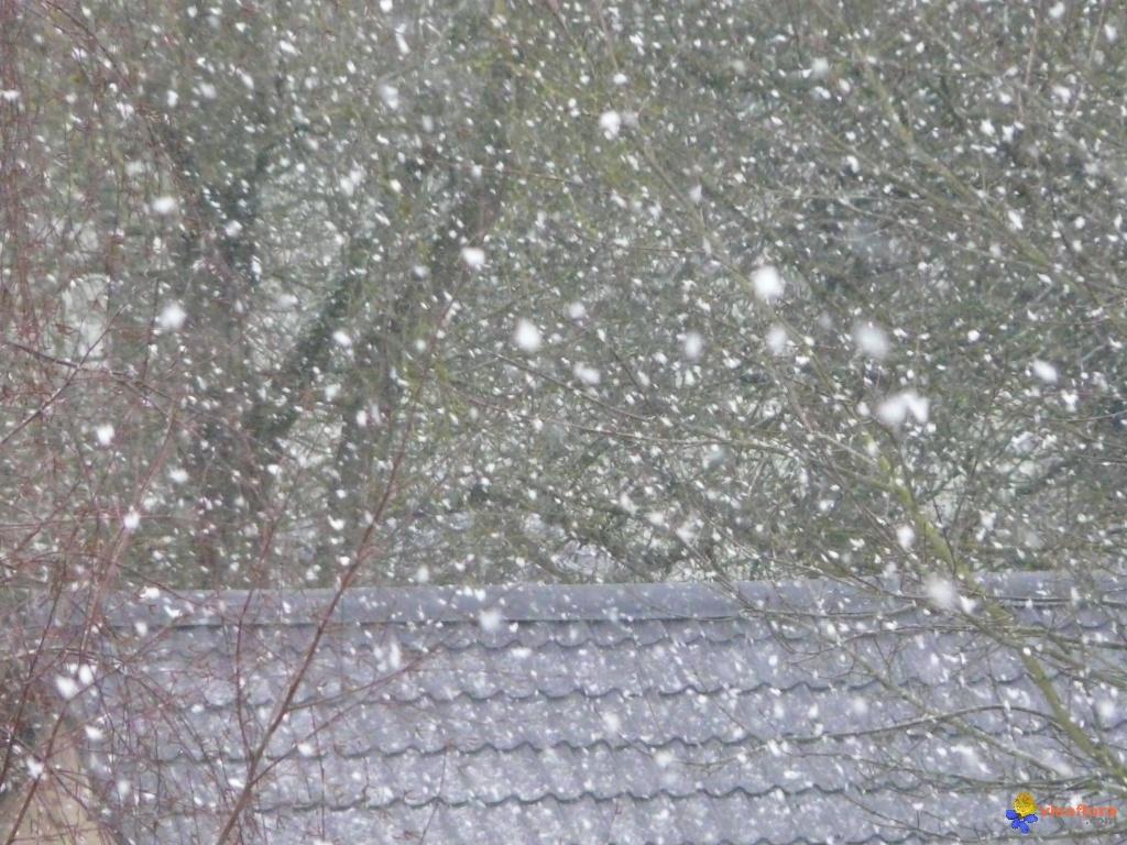 tombe-la-neige-visoflora-23238.jpg